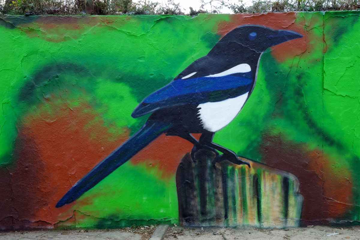 graffiti-muurschildering-ekster